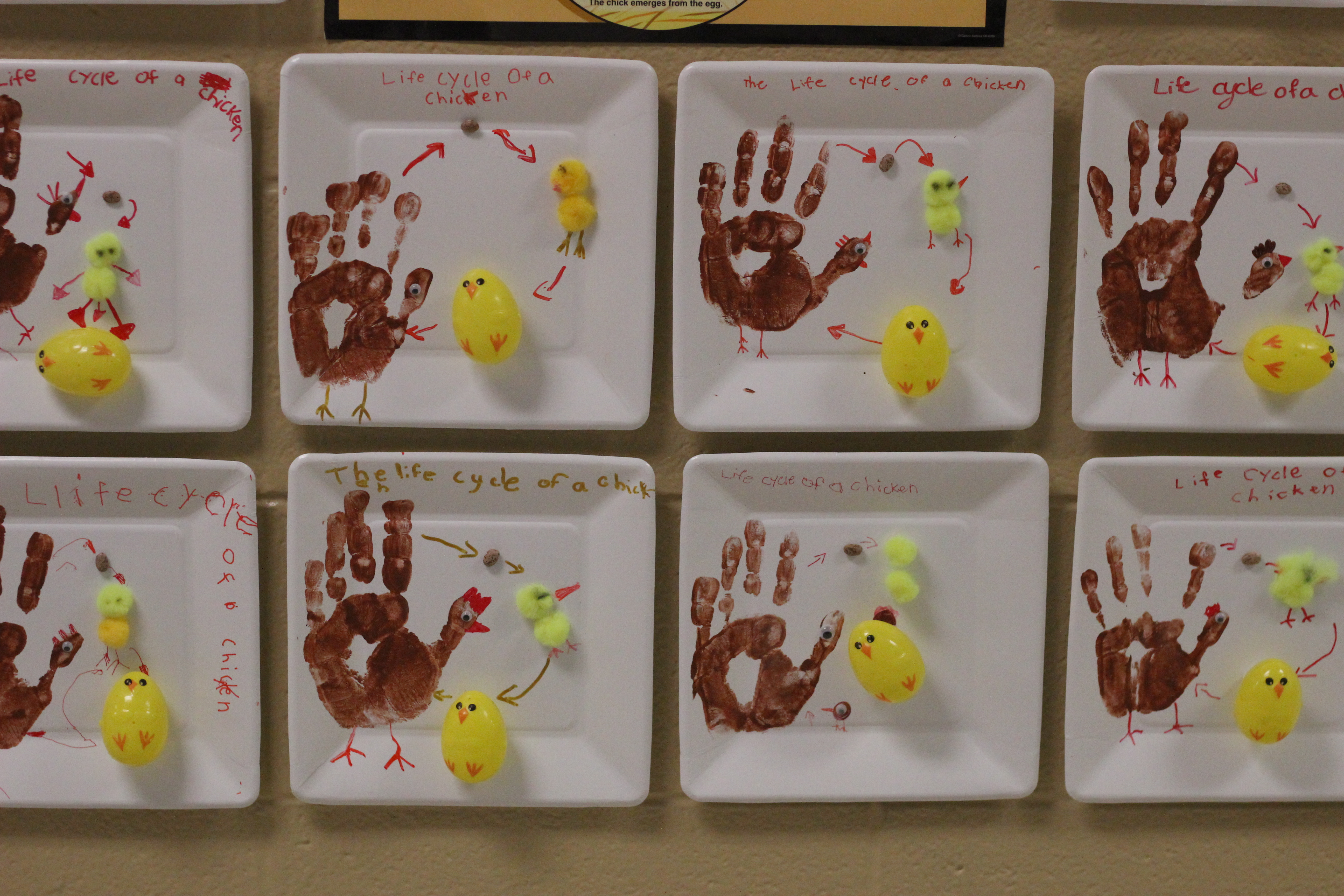 Students show the life cycle of chick