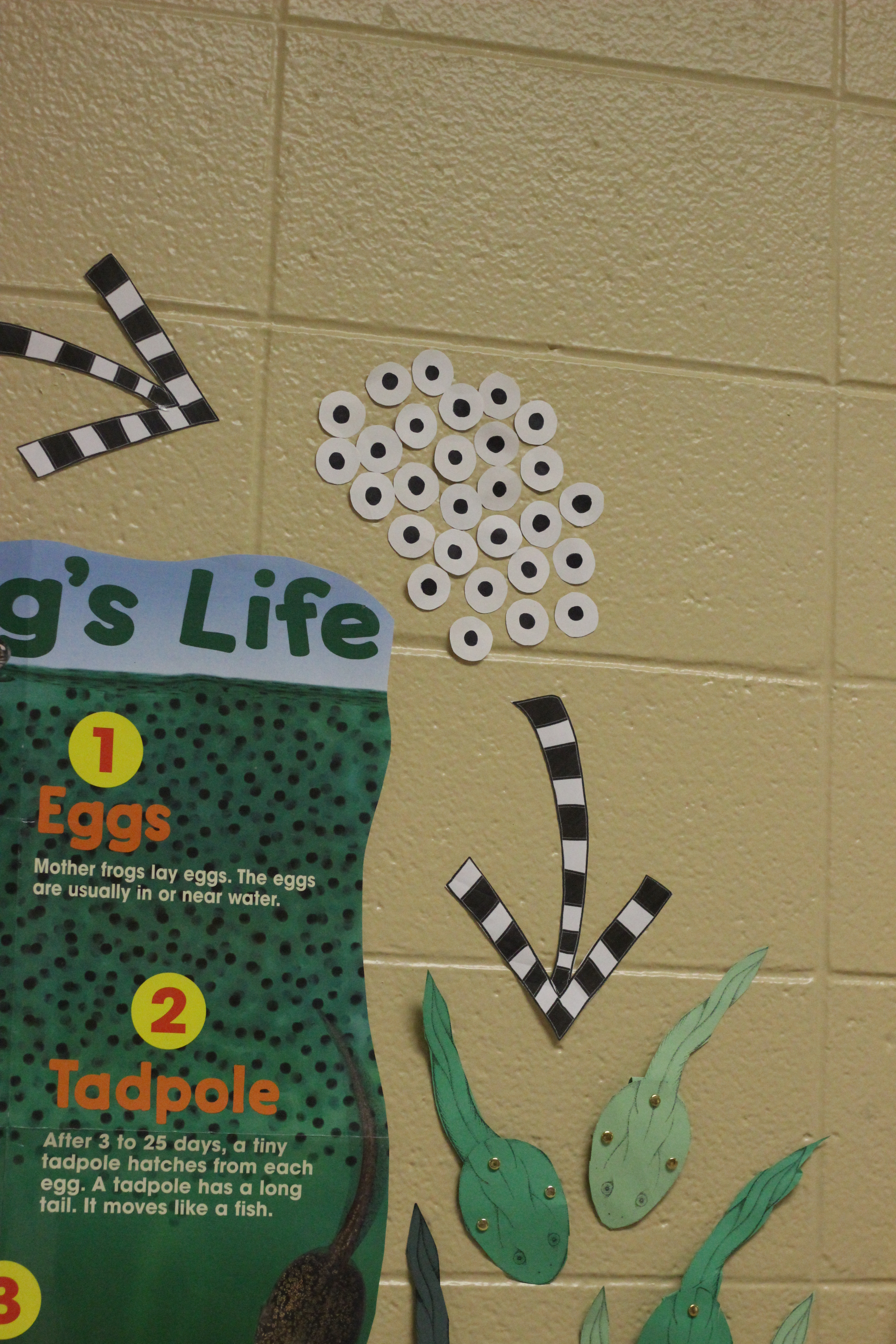 Students learn about the life cycle of tadpoles